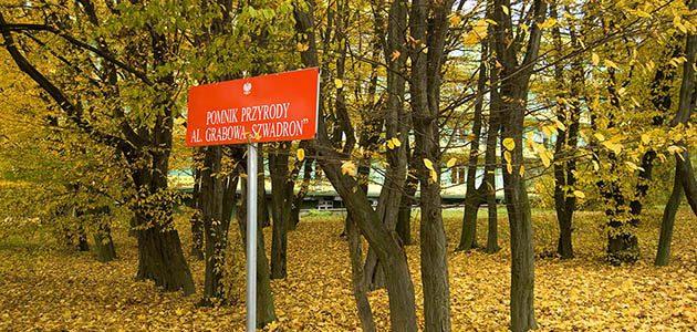 Pomniki przyrody w Kraśniku